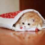 寒い冬にぐっすり眠る!冷たい布団を簡単に温める方法7選!